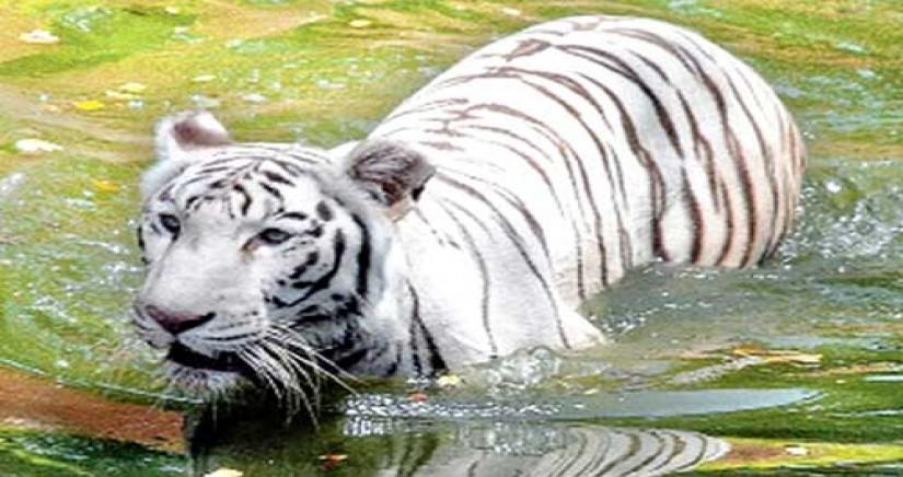 nehru-zoo-park6.jpg