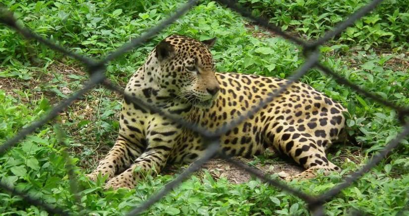 nehru-zoo-park7.jpg