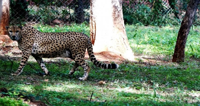 nehru-zoo-park8.jpg