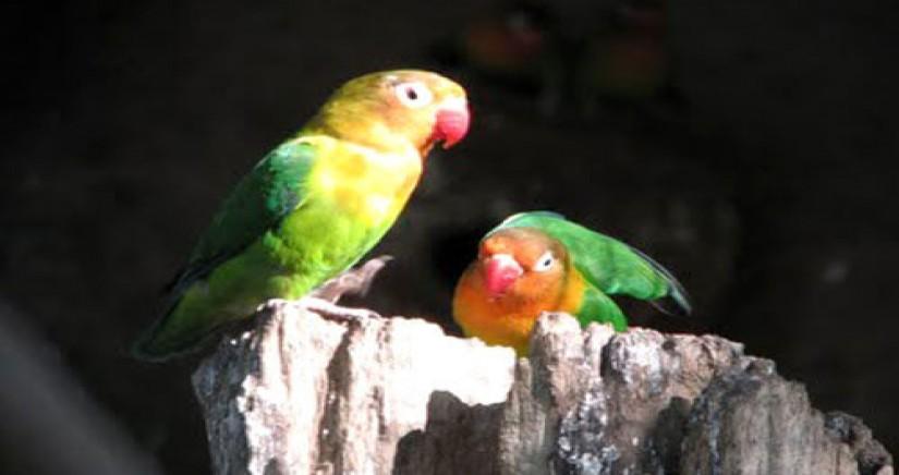 nehru-zoo-park9.jpg